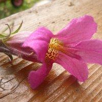 Цветок :: Наталья Березко