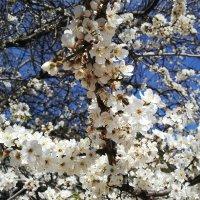 весна в Крыму :: Ксения