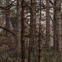 хижина в лесу :: Vitalij P