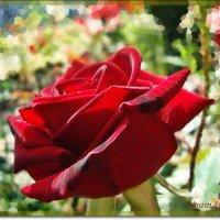 Роза любви :: Лидия (naum.lidiya)