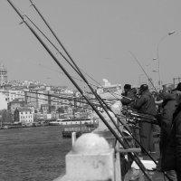 рыбаки на галатском мосту :: Светлана Королева