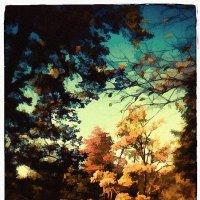 Вечер в парке 37 :: Цветков Виктор Васильевич