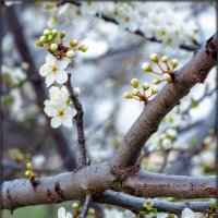 Весна :: Sergey Bagach