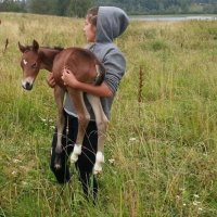 конный клуб в Карелии :: Андрей Нестеров