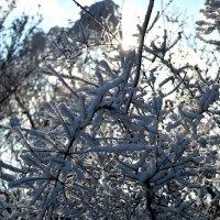 Пушистая зима :: Александр Сапожников