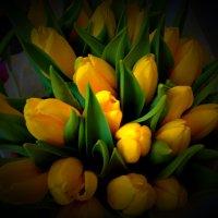Желтые тюльпаны :: Светлана Лысенко