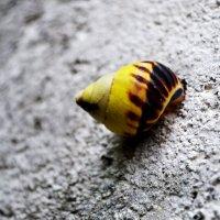 Балийская улитка :: Венера Чернышова