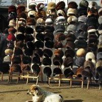 Собаки мудрое житейство... :: Лесо-Вед (Баранов)