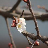 А у нас весна :: Сергей