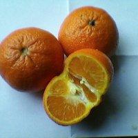 Апельсины :: Миша Любчик
