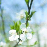 весна :: маша