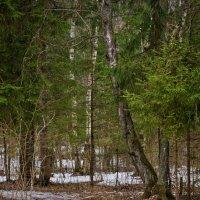 Конец зимы :: Сергей Басов