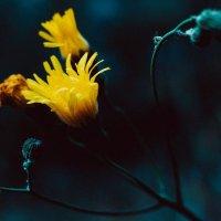 Желтый :: Алиса Лыжко