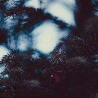 Одинокий листок :: Алиса Лыжко