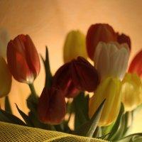 Тюльпаны :: Екатерина Елсукова
