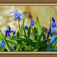 Весенние цветы. :: Екатерина Шалдуга