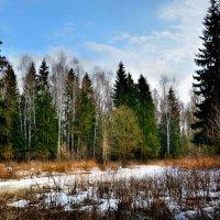 У лесной дороги :: Юрий