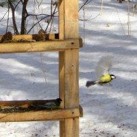 Столовая для птиц . :: Мила Бовкун