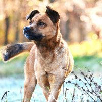 Пёс :: Екатерина Лещенко