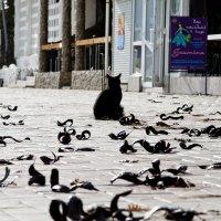 Кошка с бобовыми червячками :: Геннадий Валеев
