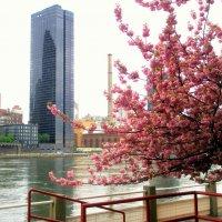 Весна в Нью-Йорке. :: Елена