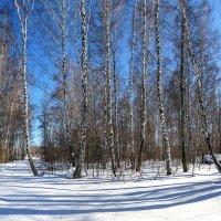Зимний пейзаж. Окрестности Новосибирска. Панорама 4 верт. кадра. 30.03.2015. Samsung Galaxy S5 :: Vadim Piottukh
