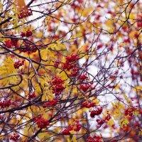 Осень..осень :: Наталья Радина