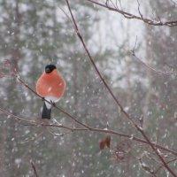 Снег идёт.. :: Галина Полина