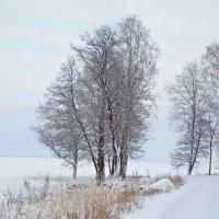ещё о зиме :: Елена