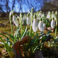 весной :: Светлана