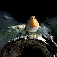 И сколько птичку ждать ? :: Alexander