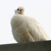 Сегодня - день  птиц..... :: Валерия  Полещикова