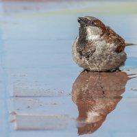 День птиц..,в день дурака :: Андрей Поляков