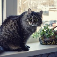 Прогулка домашнего кота :: Ирина Приходько