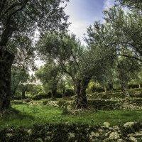 Старый сад :: Gennadiy Karasev