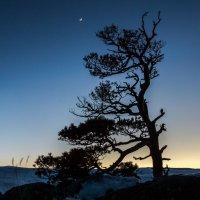 Одинокое дерево 2 :: Александр Хорошилов