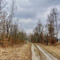 Вдоль  реки. :: Валера39 Василевский.