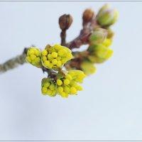 Весна наступает :: Swetlana V