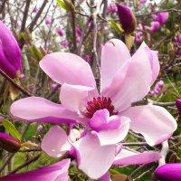 Розовой феерии трепетный каскад! :: Мухаббат Юлдашева