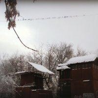 Новый вид бизнеса придумали риэлторы, можно оформить ипотеку  семейным и только белоснежным голубям :: Ольга Кривых