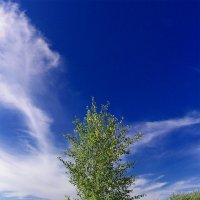 дерево :: Laryan1