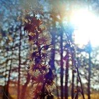 Осень в лесу :: Mavr -