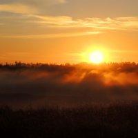 Утренняя тишина :: Ромил Фёдоров