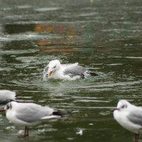 Зимние купания :: Наталья Довбыш
