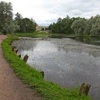 Озеро Белое. Сваи с 19-20 века :: Наталья