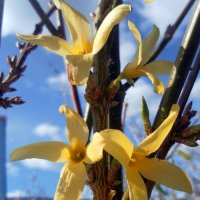 Весна :: Агриппина