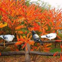 краски осени :: георгий петькун