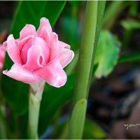 flower784 :: yameug _