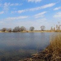 Природа в марте на донской земле... :: Тамара (st.tamara)