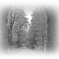 Осень в черно-белых тонах... :: Tatiana Markova